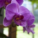 Pokojové květiny, nenáročné na pěstování v domácnosti