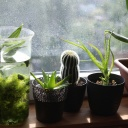 Pokojové rostliny v bytě a výhled z okna na zeleň? Ideální kombinace pro zdraví!