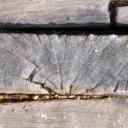 Poruchy dřevěných konstrukcí