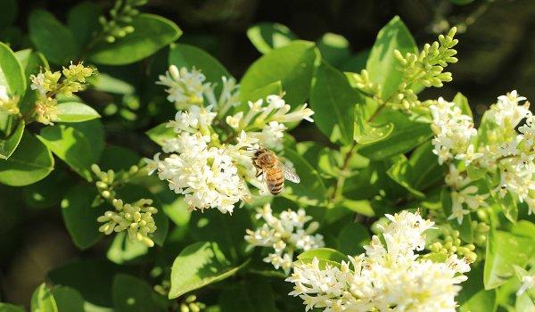 včely, med, propolis, zdraví, přírodní antibiotikum