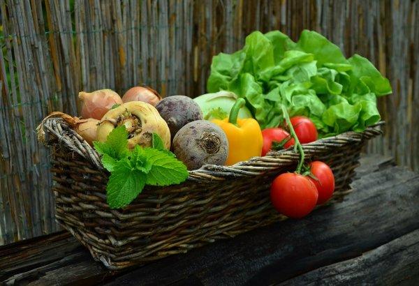 zelenina, pěstování zeleniny, záhony, zahrada