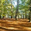 Psychologie, která se zabývá vztahem člověka s přírodou - ekopsychologie