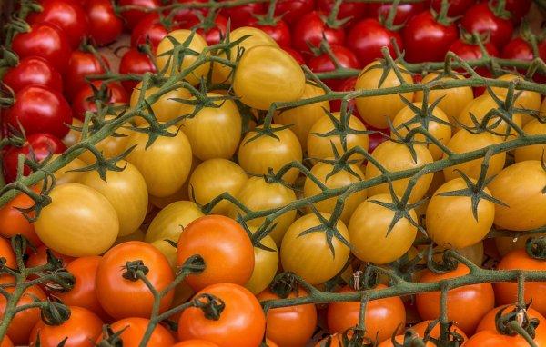 rajčata, imunita, vitaminy, rakovina