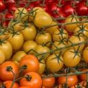 Rajčata nepatří do ledničky a jsou ideálním ovocem pro boj s podzimními virózami