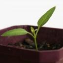 Rostliny a jejich přesazování