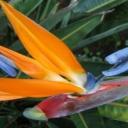 Rostliny s puncem exotiky