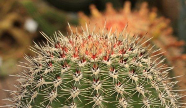 Rostliny v bytě mohou být i nebezpečné