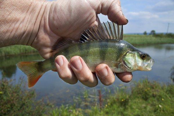 ryby, zdraví, rtuť