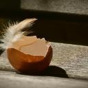 Skořápky z vajec nevyhazujte, mají ještě mnoho využití