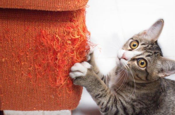 škrabadlo, kočky, domácí mazlíčci