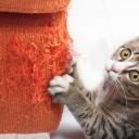 Škrabadlo aneb proč by nemělo chybět v žádné domácnosti s kočkami?