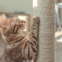 Škrabadlo pro kočku si můžete i sami vyrobit