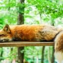 Spánek zlepšuje náladu a pomáhá ovládat emoce