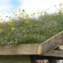 Střechy a zeleň - vegetační střechy
