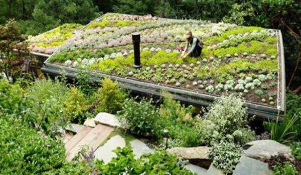 bydlení, vegetační střechy, ekologie