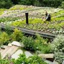 Střešní zahrada splňuje ekologické, estetické i ekonomické nároky