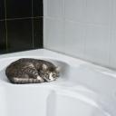 Teplá nebo studená sprcha? Obě mají své nesporné benefity!