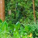 Unikátní hotel s deštným pralesem v Dubaji