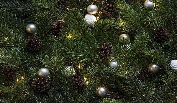 Vánoce, vánoční stromky, smrk, jedle, borovice