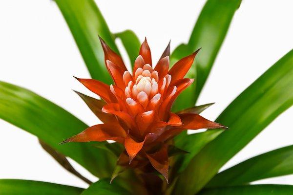 rostliny v bytě, zeleň, bydlení, předsíň