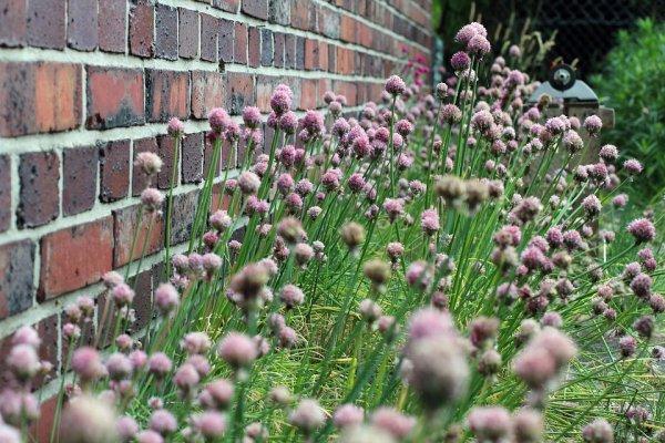 zahrada, alergie, zdraví, stromy, bříza, líska