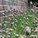 Zahrada pro alergiky