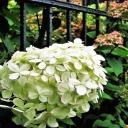 Zahrada ve stylu staré Anglie