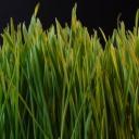 Základní údržba trávníku