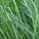 Zelený trávník z půdopokryvných rostlin