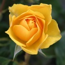 Žlutá barva a speciální vzorec, který zajistí štěstí